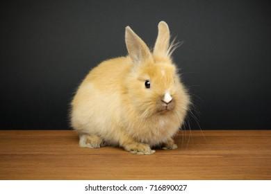 Red bunny rabbit on black background