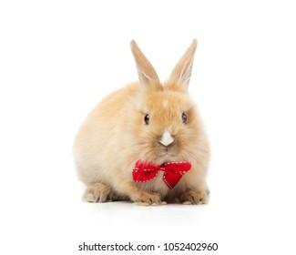 Red bunny rabbit portrait on white background