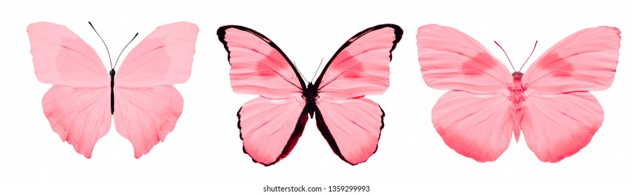 red butterfly. natural insect. isolated on white background