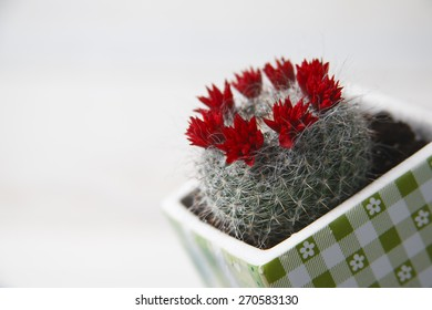 a red cactus is in a pot