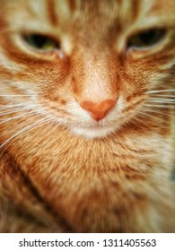 Red calm cat close-up, selective focus on nose, blurred eyes, mobile filtered photo