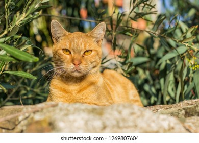 red calm cat portrait in back yard garden street natural environment green background