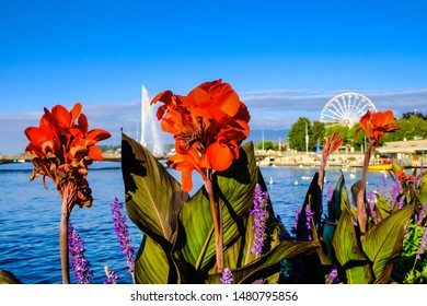 Red Canna Indica lily flower on background of beautiful Lake Geneva, close-up.