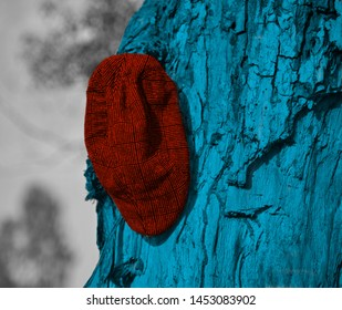A red cap hanging on a parts of a tree unique photo