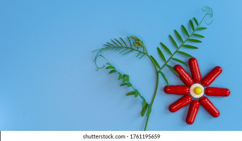 Red capsules are laid out in the form of a flowering plant on a blue background. To close. A conceptual image of plant-based food additives for the healthcare and pharmaceutical industries. Free space