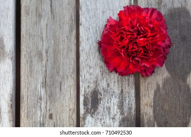 Red carnation flower empty pieces paper stock photo edit now red carnation flower with empty pieces of paper for the letter o mightylinksfo