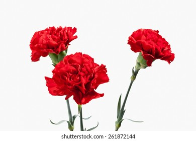 Red carnations bouquet