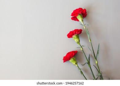 Red carnations on a gray background. Bouquet of three red carnations