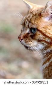 a red cat