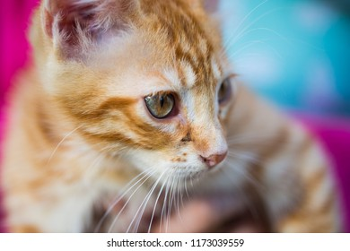 red cat baby, macro, sweet cat