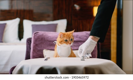 Red cat with bib waiting for food in the room