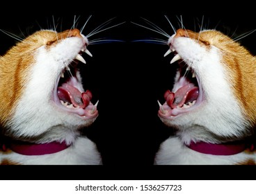 The red cat in the collar yells, opening his mouth. Pattern on black background