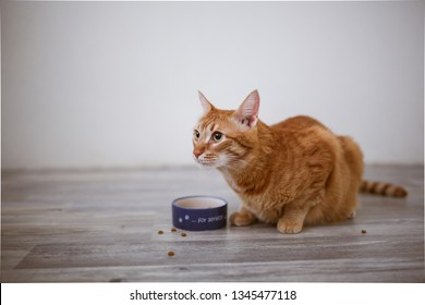 red cat eats from a bowl in a bright interior, real light interior
