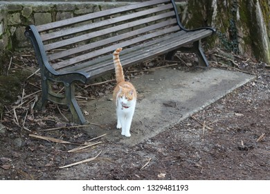 Red cat in front to a bench in the park