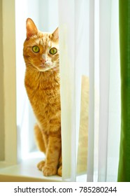 red cat in home