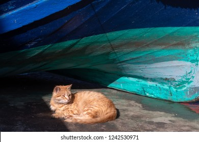 Red cat laying on the sunny spot near the fishing boat in the Essaouira port, Morocco