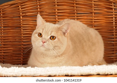 Red cat lying in a basket