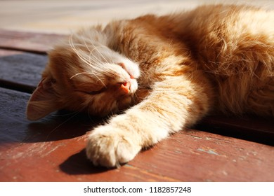 red cat lying and basking in the sun