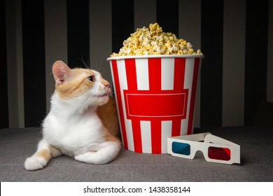 red cat lying on the couch with popcorn and watching television, he is resting in the evening in the room, copy space for text