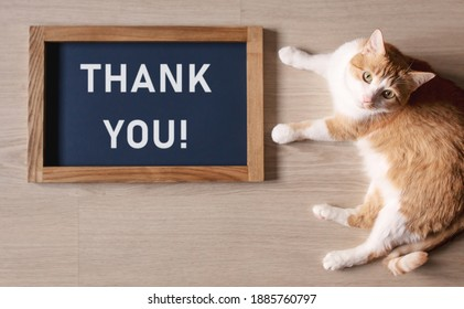 Red cat lying on the floor with blurred the poster in the frame with the words Thank you.