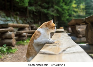 Red cat lying and resting in the autumn on a wooden bench in the forest.