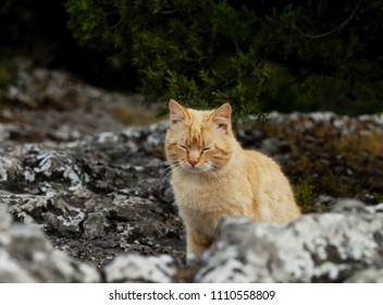 Red cat in nature