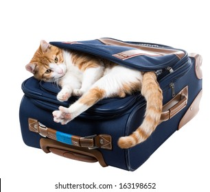 Red cat is in a pocket and stretches suitcase