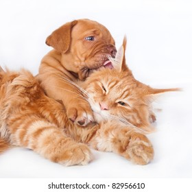 Red cat and red pup on a white background