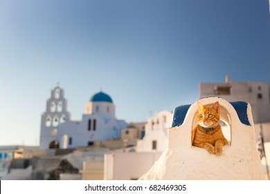 Red cat relaxing on the wall during sunset, Santorini, Greece