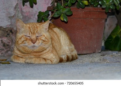 red cat resting with closed eyes crouching on a cool stone floor in the shadow of a plant beside the wall of a house