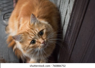 red cat sitting at the door