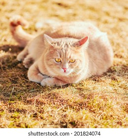 Red cat sitting on green spring grass. Outdoor portrait