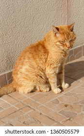Red cat sitting on pavement in a garden