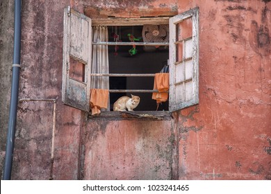 red cat sitting on window sill