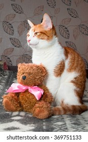 Red cat sitting with a Teddy Bear