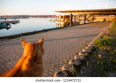 Red cat sitting and waiting on the pier at autumn sunset