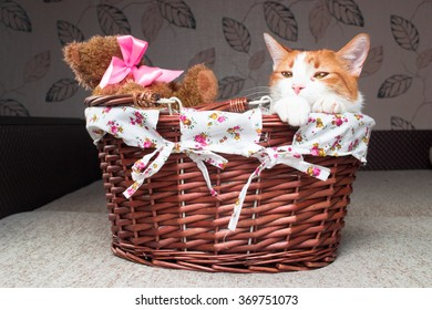 Red cat sitting in a wicker basket with a Teddy Bear