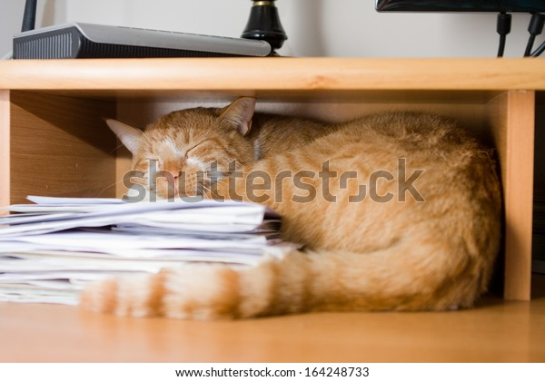 red cat sleeping on a pile of papers