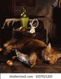 red cat sleeps with the dried fish in basement near a barrel on which sour cream is poured out from a jug