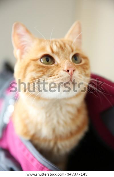 Up Close Kitten Sports Bag