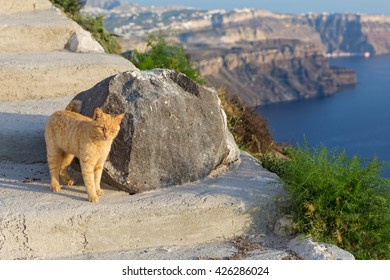 Red cat standing at the big rock above the sea
