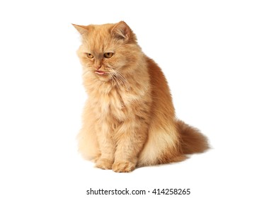 Red cat stuck out his tongue