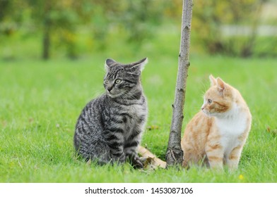 red cat and tabby cat sitting on meadow  in the garden