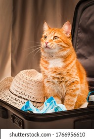 red cat is waiting for a trip