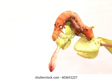 red caterpillar with flower