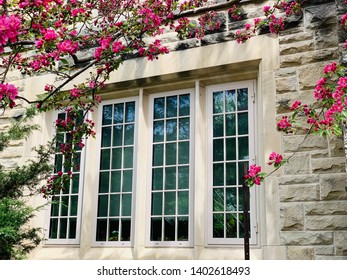 Red cheery flowers by window