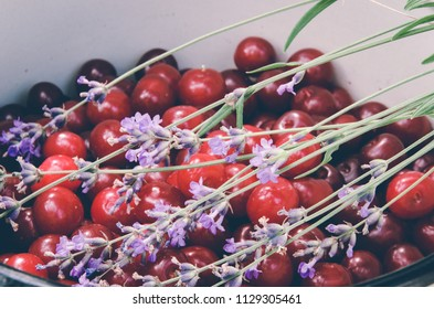Red cherries between lavender