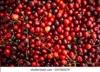 Red Cherries. pile of ripe cherries with stalks.