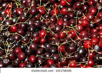 Red Cherries sold att Hotorget market, Stockholm Sweden