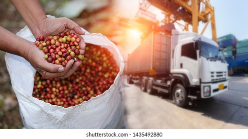 Red cherry coffee bean Fruit and food distribution, tropical fruit of Thailand .Truck loaded with containers ready to be shipped to the market.
